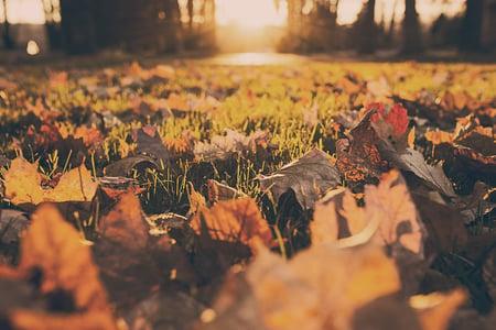 Autumn Fall Folliage